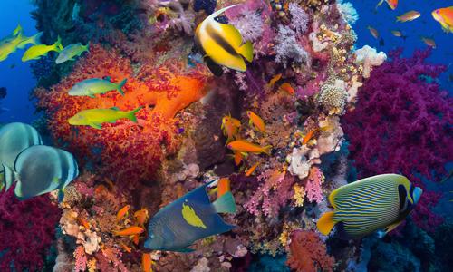 Contrôle à distance température aquarium